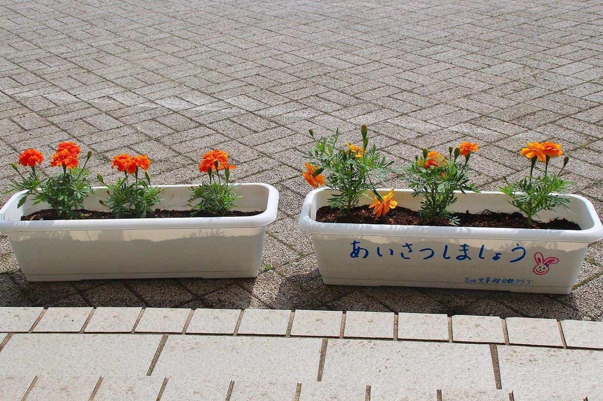 https://www.taiwa-tk.ed.jp/yoshida-e/914e8059559a08e0434955c20572bf528f138b3d.jpg
